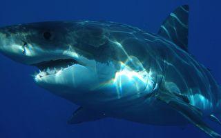 妻遭鲨鱼撕咬 澳洲勇夫飞扑痛击成功救回