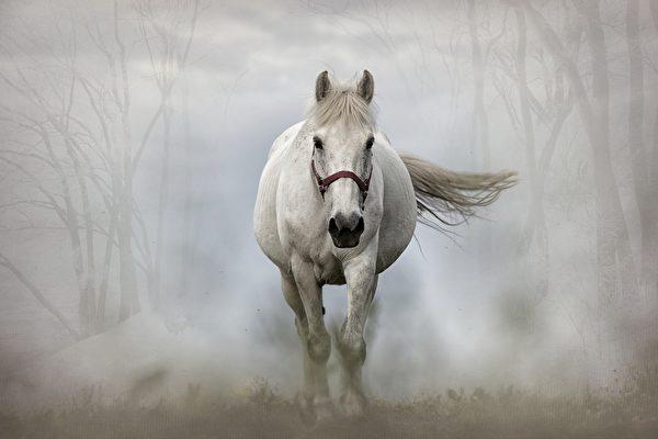美国太空部队为什么雇用一匹马?