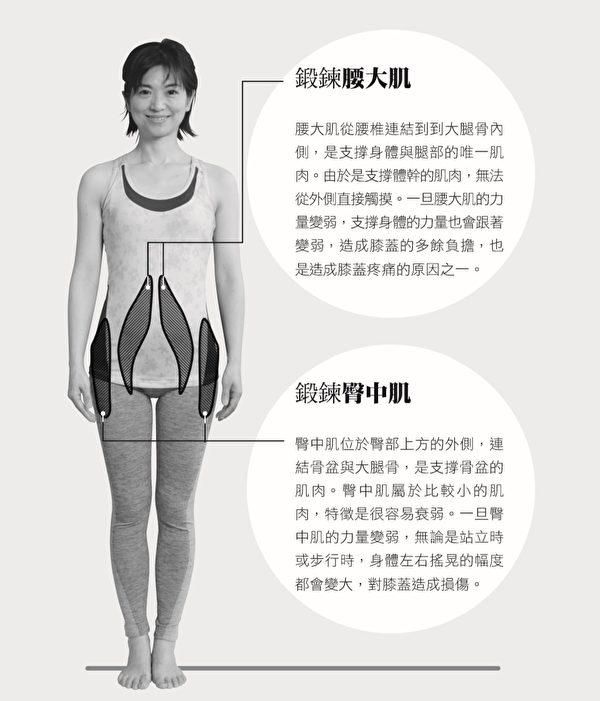 腰大肌和臀中肌,是保护膝关节的两大重要肌肉。(原水文化提供)