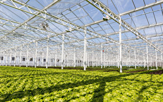 屋頂農場Lufa Farms 安心便利的都市菜園