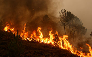 美國男子用腳踩踏兩小時 試圖撲滅野火