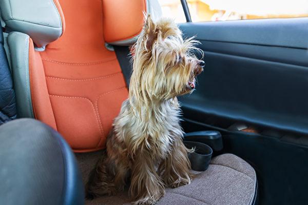 热浪下小狗被困车内恐丧命 英男砸车窗救它