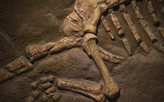 加研究員首次發現:7500萬年前恐龍患骨癌