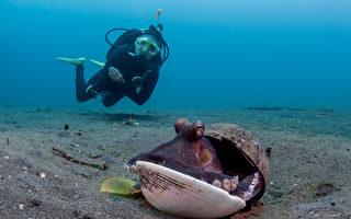 小章魚用塑膠杯當殼 善心潛水員幫牠換新家