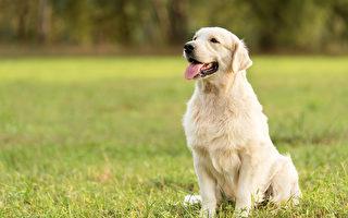 加拿大胖狗逃过死劫 一年内减重45公斤