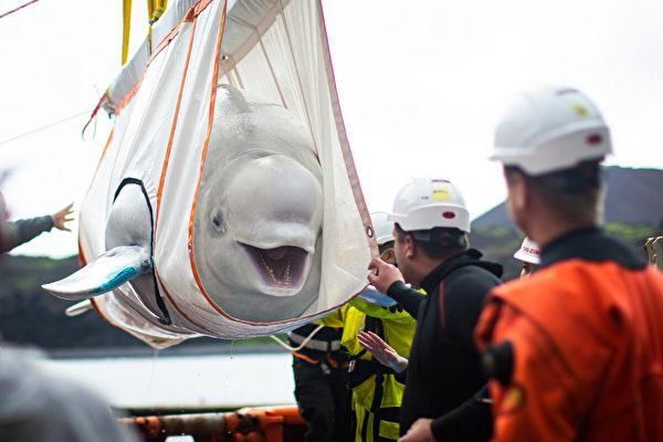 表演雜耍近十年 白鯨姐妹重返大海後「笑」了