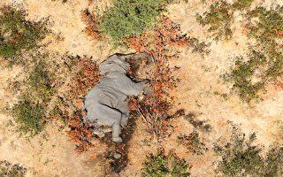 博茨瓦納數百頭大象離奇死亡 謎底揭曉