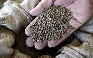 神祕種子包裹引擔憂 亞馬遜禁外國種子銷美國