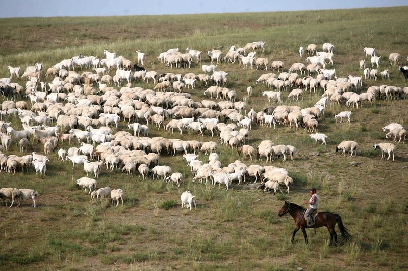 組圖:中共「禁牧」強行終止內蒙的遊牧生活