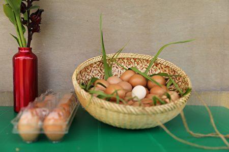 """""""风草农园""""帮忙除草的母鸡除了让土壤不受除草剂污染外,基地启用一年来,更惊喜带来约1万颗有机鲜蛋的回馈。"""