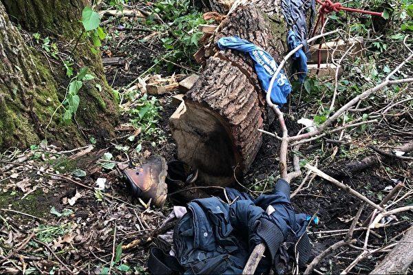 美59歲退伍老兵 被大樹壓雙腿 4天後獲救