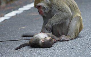 野生动物路杀频传 玉管处吁勿喂食勿超速