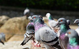 最新研究推翻150年鳥笨假設 揭其驚人祕密