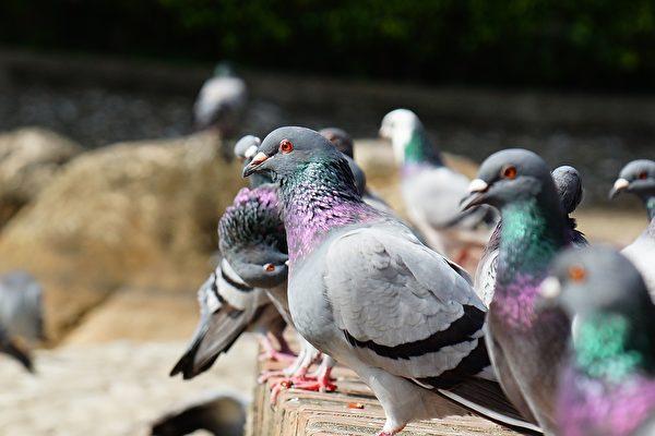最新研究推翻150年鸟笨假设 揭其惊人秘密