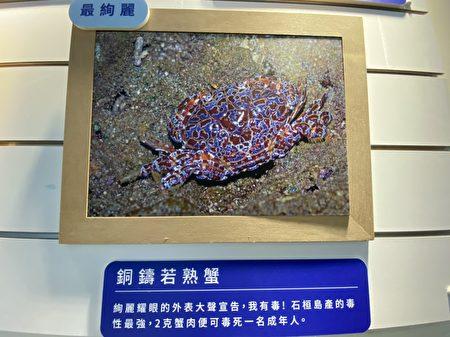 螃蟹家族中有最絢麗外表的螃蟹,但你知它有毒否。