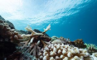 2020全台珊瑚白化 调查估约3成死亡