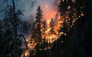 組圖:美國加州野火蔓延 逾6400座建築被毀