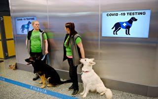 芬兰机场启用小狗检测中共病毒 10秒搞定