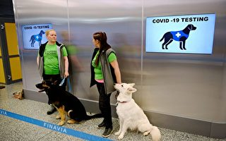 張林:芬蘭機場用偵測犬測試中共病毒