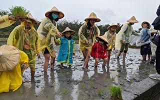 小农夫体验营 中原与复旦高中教室搬进稻田