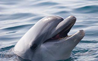 海豚受困美国内陆9英里池塘 都是飓风害的
