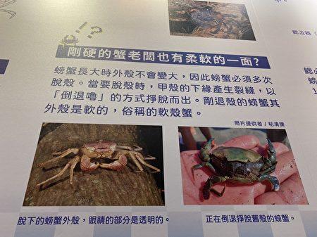 你不知道的螃蟹的秘密都在這喔!