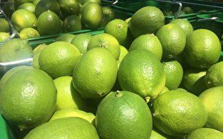 柠夏晚风顿物风华再现  屏东竹田行销优质柠檬