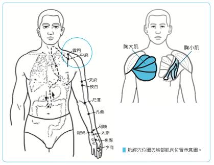 改善駝背和肺虛,首先要針對胸小肌與胸大肌做足夠的放鬆。(商周出版提供)