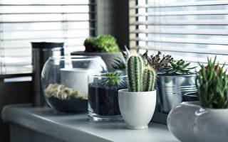 無人澆水 墨爾本大量辦公室植物陷危機