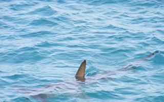 丈夫遭鯊魚攻擊 懷孕妻子跳海將他救回來