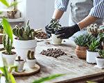 為什麼多肉植物養不活 正確方法你做到了嗎?