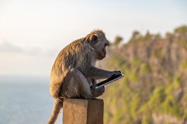 马国男子找回遗失手机 竟有猴子自拍画面