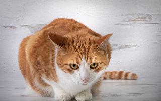 小貓戴員工證在澳洲醫院當警衛 用喵聲退敵