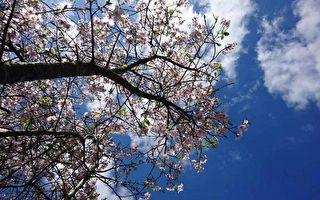 麥立:花開花落