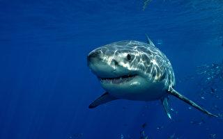 超驚險 無人機助澳前衝浪冠軍鯊口逃生