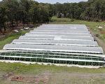 警方破获澳洲最大大麻案 市值4000万 14人被控