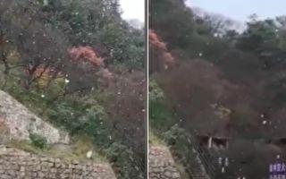 【视频】洛阳白云山、老君山景区均下雪