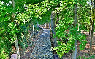 觀音山鳳凰山變裝 楓林祕境好療癒