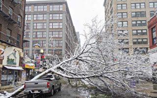 【視頻】波士頓10月降雪量創紀錄 華埠樹倒封路