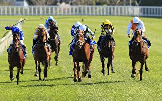新州逐步放寬疫情限制 悉尼恢復春季賽馬