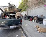 洛杉矶失败的游民政策 女作家诉被骚扰遭遇