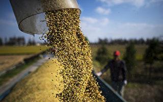 粮食价格达十年新高 冲击亚洲消费者和企业