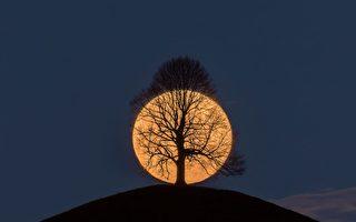完美捕捉枯樹後的滿月 攝影師分享背後故事