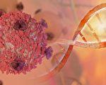 研究发现,癌细胞内藏有特定细菌,不同的癌症伴随不同的菌种。(Shutter Stock)