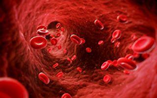 人類胚胎中發現超強血液幹細胞