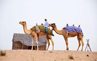 駱駝被雪覆蓋!撒哈拉沙漠氣溫跌至-3℃飄雪