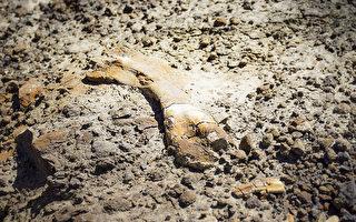 超罕见 加国12岁男孩发现幼年鸭嘴龙化石