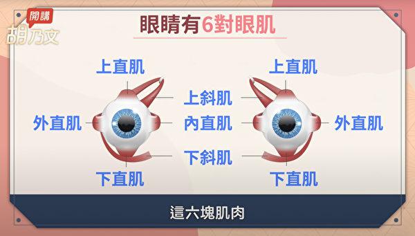 锻炼眼球肌肉,让眼睛肌肉活动自如,眼睛就会更灵活,同时舒缓视力疲劳。(胡乃文开讲提供)
