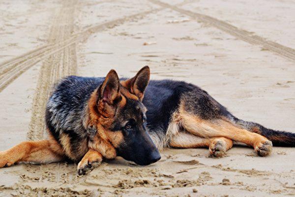被主人打毒針並活埋 小狗自己挖開墳墓逃出