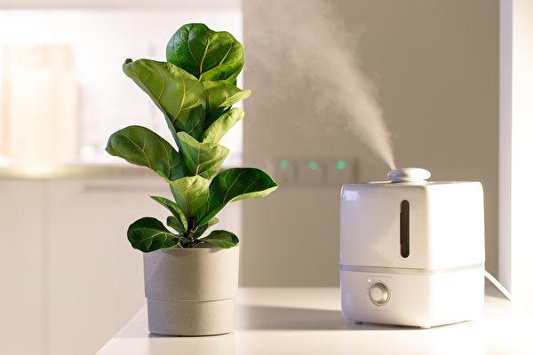 加濕器, 植物